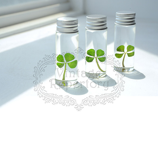 Genuine Four Leaf Clover St Patricks Day Lucky Charm Party Favor Herbarium Gifts